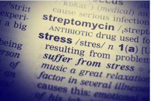 stress-rats